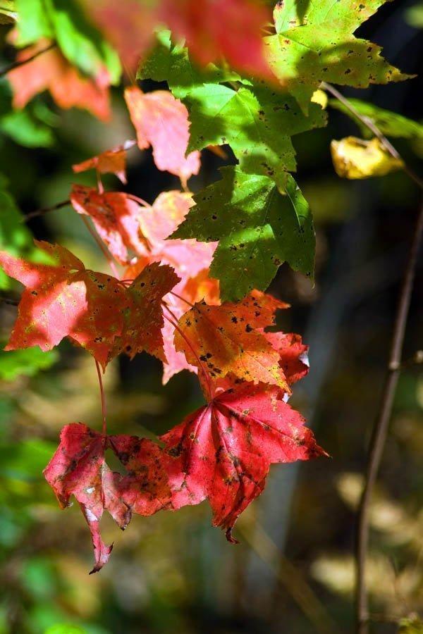 Autumnleaves_conniehabash_counseling_yoga_spirituality_meditation