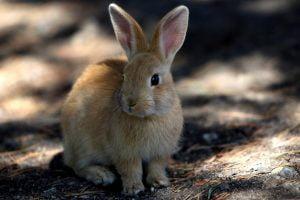 bunny_conniehabash_counseling_spirituality_yoga_meditation