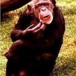 confusedmonkey_counseling_yoga_menlopark_meditation_conniehabash