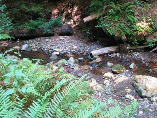 Purissima redwoods by Castlelass