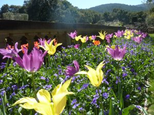 springtime_conniehabash_counseling_spirituality_yoga_menlopark