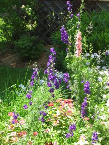 gardenflowers (2)